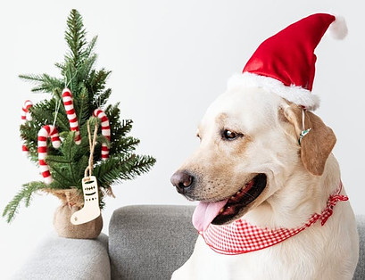 Dog with Christmas Tree