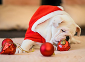 Dog with ornaments